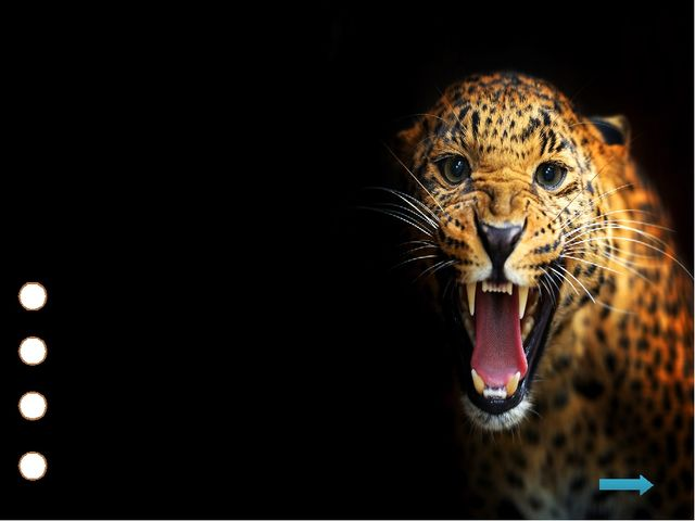 Где леопарды любят устраивать тайники с добычей? На ветвях деревьев В ямах В...