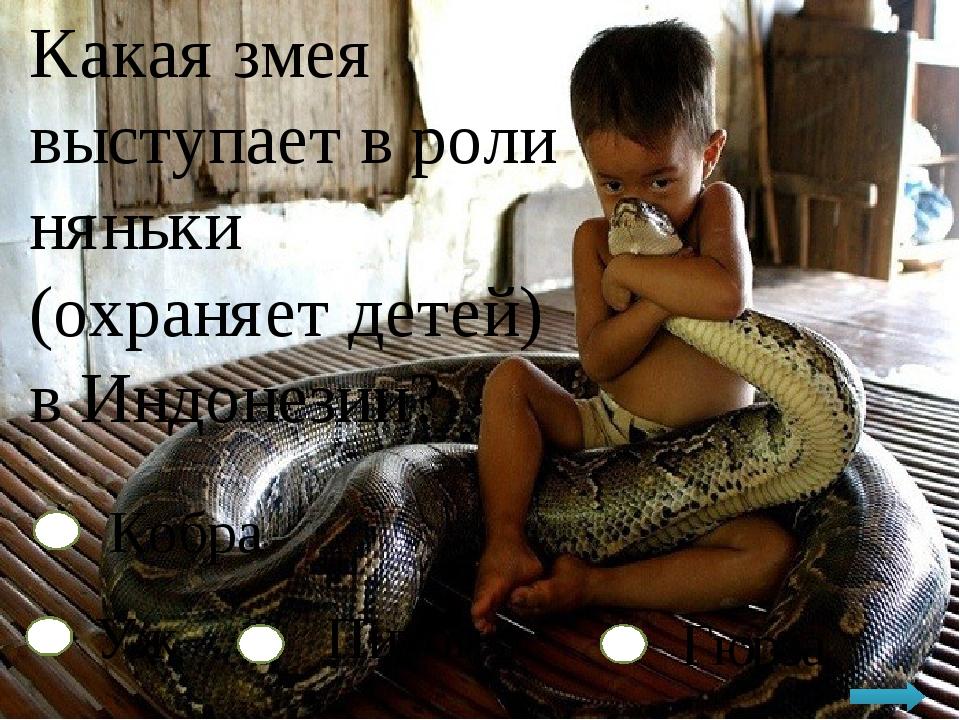 Какая змея выступает в роли няньки (охраняет детей) в Индонезии? Кобра Уж Пит...