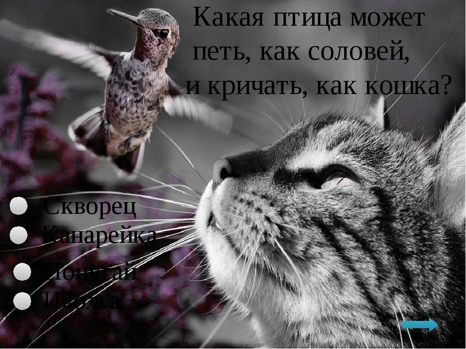 Какая птица может петь, как соловей, и кричать, как кошка? Скворец Иволга По...
