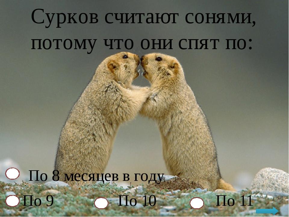 Сурков считают сонями, потому что они спят по: По 8 месяцев в году По 9 По 10...