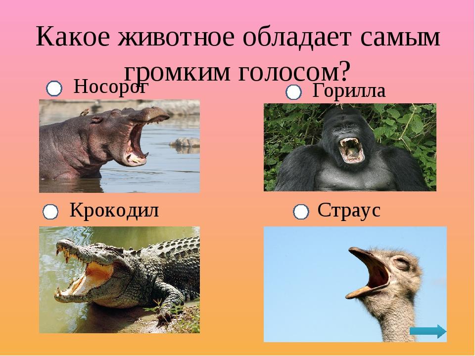 какое животное обладает самым громким голосом