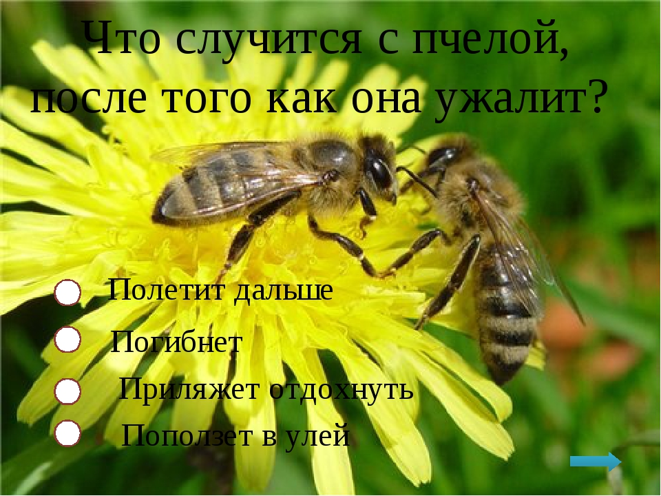 Что случится с пчелой, после того как она ужалит? Полетит дальше Погибнет При...