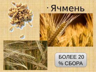 Ячмень БОЛЕЕ 20 % СБОРА