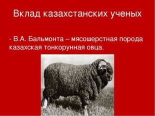 Вклад казахстанских ученых - В.А. Бальмонта – мясошерстная порода казахская т