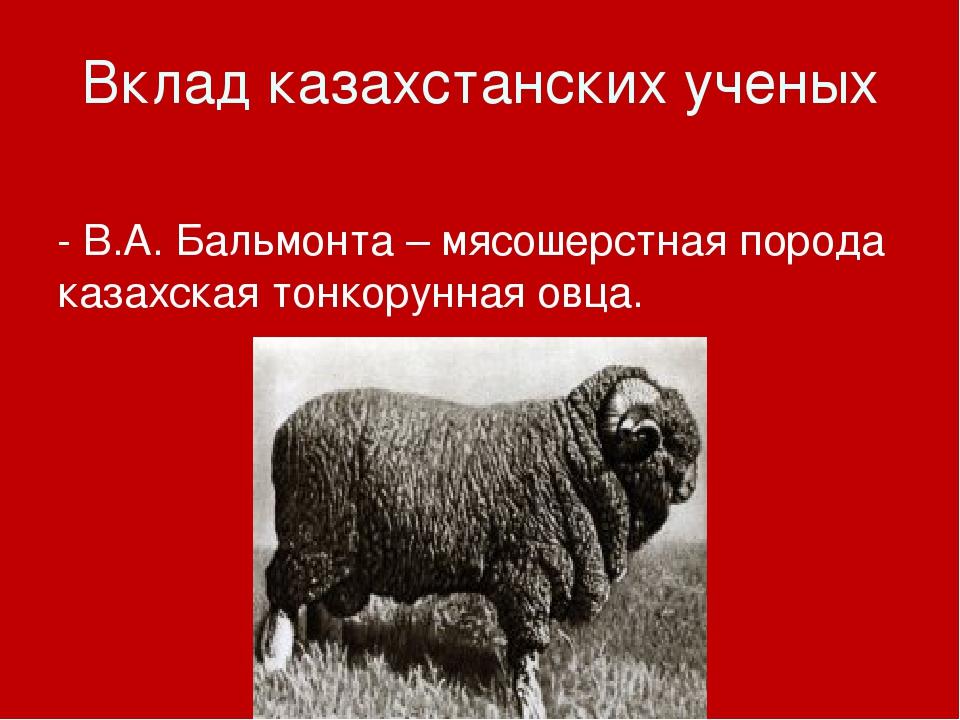 Вклад казахстанских ученых - В.А. Бальмонта – мясошерстная порода казахская т...