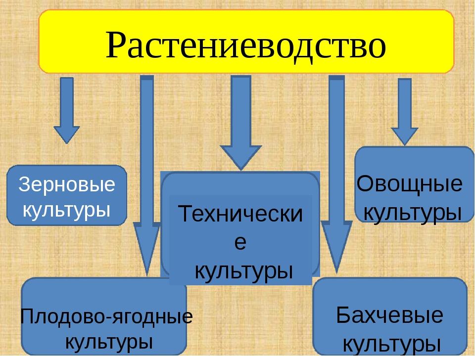 Растениеводство Зерновые культуры Технические культуры Овощные культуры Плодо...