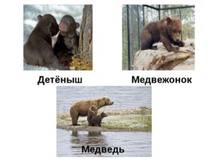 Детёныш Медвежонок Медведь