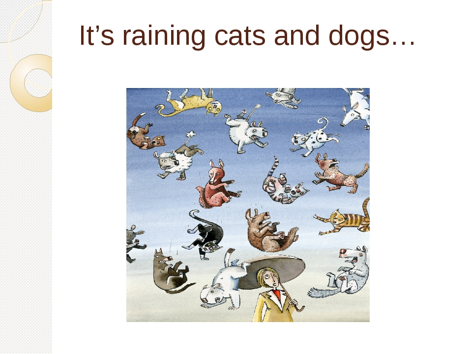 It's raining cats and dogs…