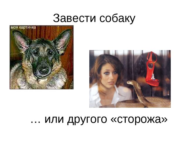 Завести собаку … или другого «сторожа»