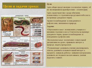 Цели и задачи урока: Цели дать общее представление о кольчатых червях, об их