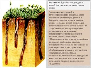 Задание 91. Где обитают дождевые черви? Как они влияют на состояние почвы Рол