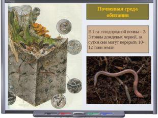 Почвенная среда обитания В 1 га плодородной почвы – 2-3 тонны дождевых червей
