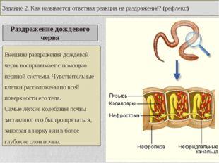 Раздражение дождевого червя Внешние раздражения дождевой червь воспринимает с