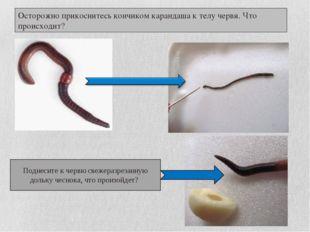 Осторожно прикоснитесь кончиком карандаша к телу червя. Что происходит? Подне