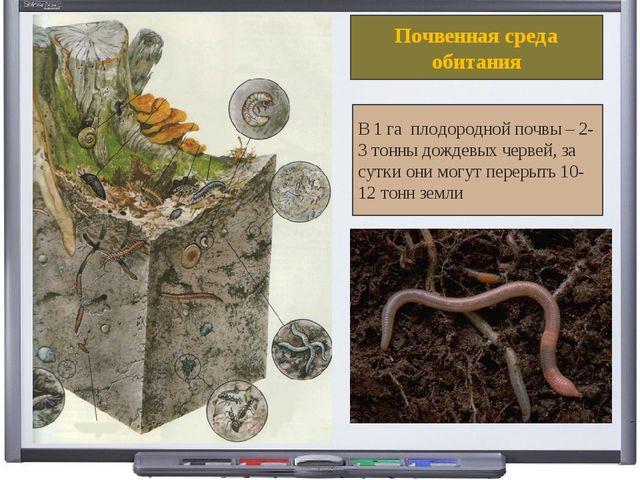 Почвенная среда обитания В 1 га плодородной почвы – 2-3 тонны дождевых червей...