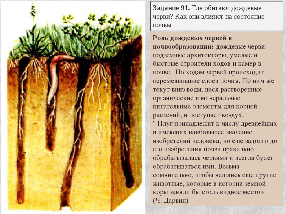 Задание 91. Где обитают дождевые черви? Как они влияют на состояние почвы Рол...