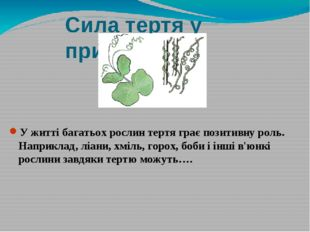 Сила тертя у природі У житті багатьох рослин тертя грає позитивну роль. Напри