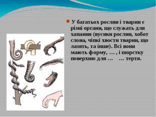 У багатьох рослин і тварин є різні органи, що служать для хапання (вусики рос