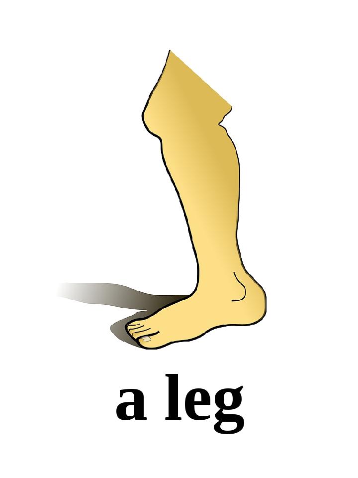 a leg