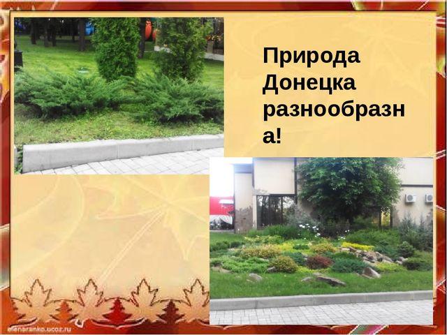 Природа Донецка разнообразна!