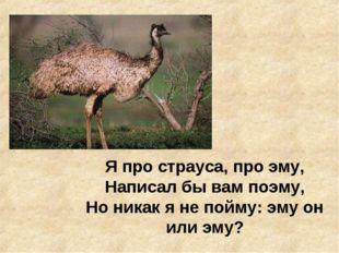 Я про страуса, про эму, Написал бы вам поэму, Но никак я не пойму: эму он или