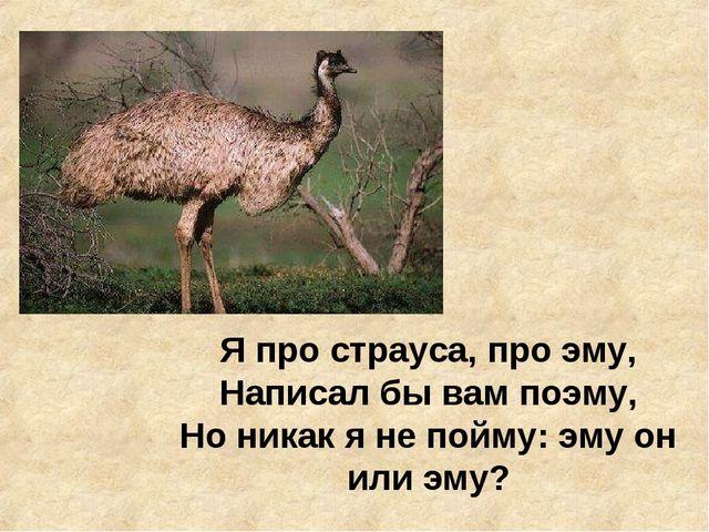 Я про страуса, про эму, Написал бы вам поэму, Но никак я не пойму: эму он или...