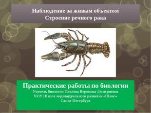 Практические работы по биологии Учитель биологии Павлова Вероника Дмитриевна