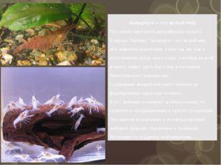 Аквариум – это целый мир По словам известного австрийского зоолога Конрада Ло