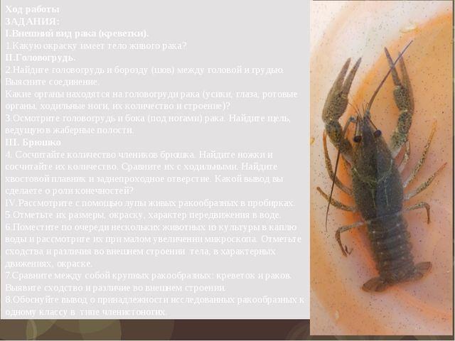 Ход работы ЗАДАНИЯ: I.Внешний вид рака (креветки). 1.Какую окраску имеет тело...