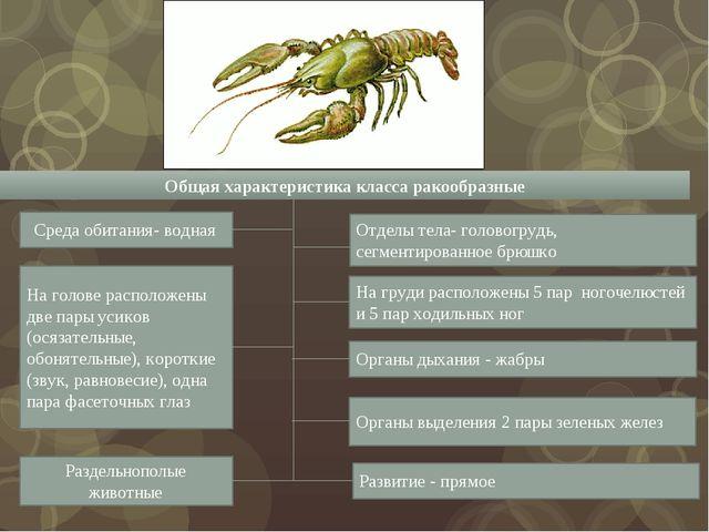 Общая характеристика класса ракообразные Среда обитания- водная На голове рас...