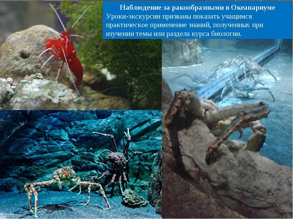Наблюдение за ракообразными в Океанариуме Уроки-экскурсии призваны показать у...