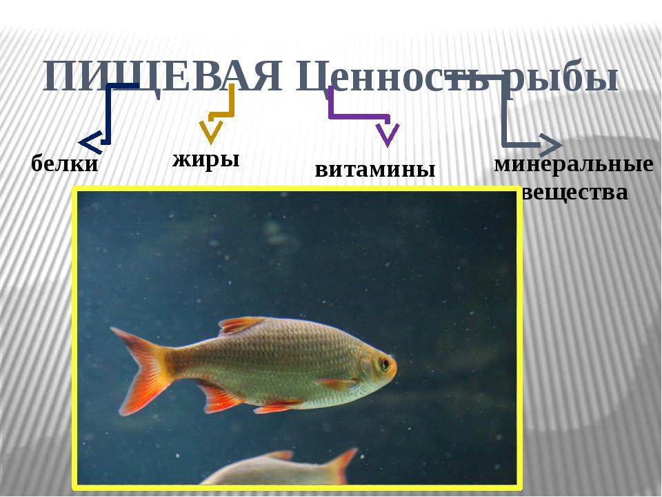 ПИЩЕВАЯ Ценность рыбы белки жиры витамины минеральные вещества
