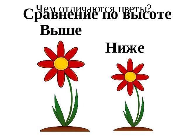 Чем отличаются цветы? Выше Ниже Сравнение по высоте