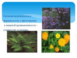 Растения используются в фармакологии, в фитотерапии, в пищевой промышленности