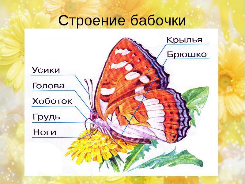 hello_html_541bd7b0.jpg