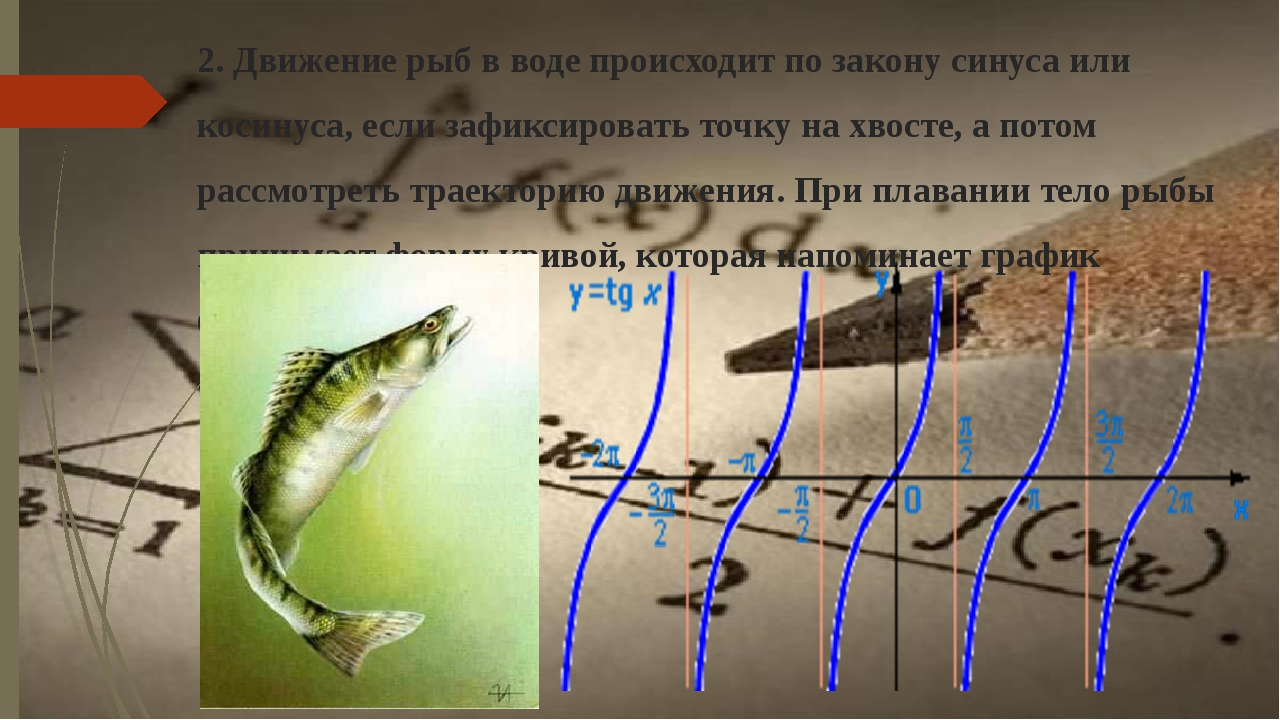 2. Движение рыб в воде происходит по закону синуса или косинуса, если зафикси...
