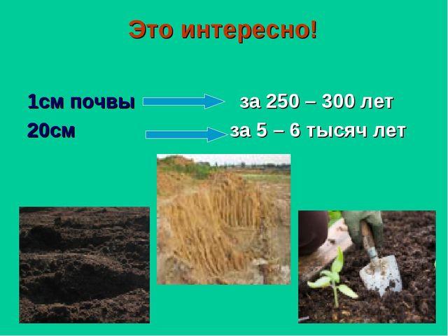 Это интересно! 1см почвы за 250 – 300 лет 20см за 5 – 6 тысяч лет