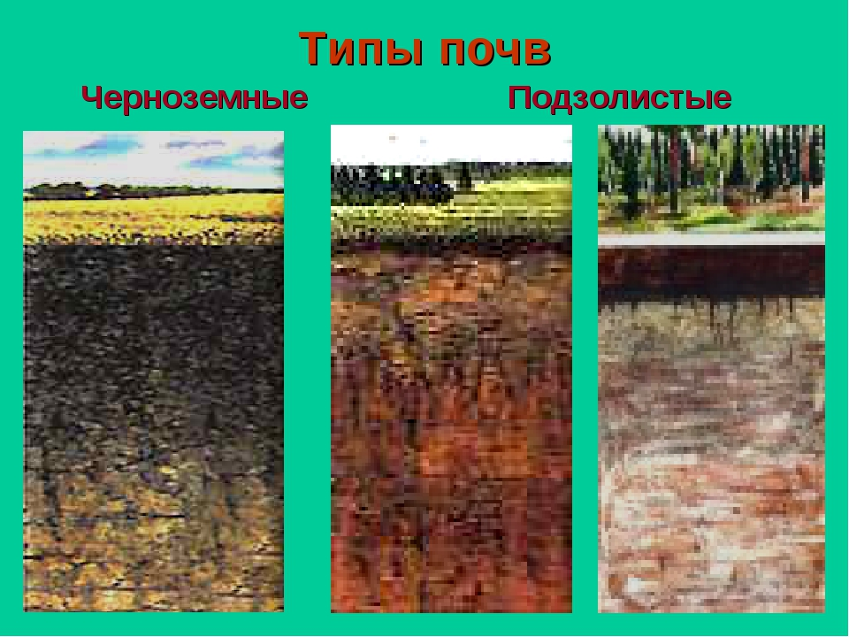 Типы почв Черноземные Подзолистые