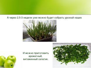 А через 2,5-3 недели уже можно будет собрать урожай наших витаминов. И можно