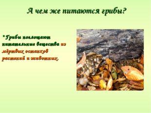 А чем же питаются грибы? Грибы поглощают питательные вещества из мёртвых оста