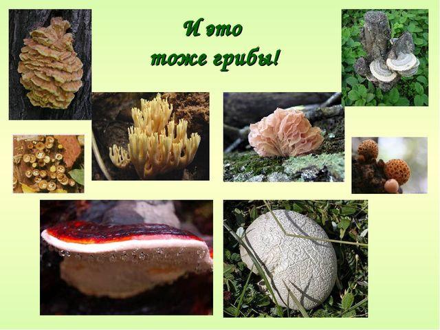 И это тоже грибы!