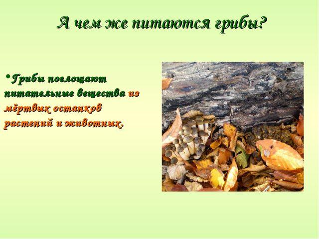 А чем же питаются грибы? Грибы поглощают питательные вещества из мёртвых оста...