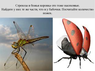 Стрекоза и божья коровка-это тоже насекомые. Найдите у них те же части, что и