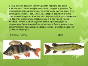 В Ивановской области насчитывается порядка ста озер, живописных, очень интере