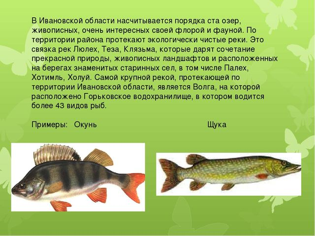 В Ивановской области насчитывается порядка ста озер, живописных, очень интере...