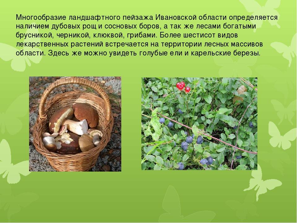 Многообразие ландшафтного пейзажа Ивановской области определяется наличием ду...