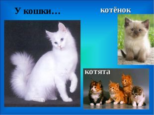 У кошки… котята котёнок