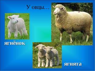 У овцы… ягнята ягнёнок