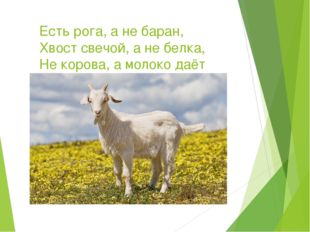 Есть рога, а не баран, Хвост свечой, а не белка, Не корова, а молоко даёт