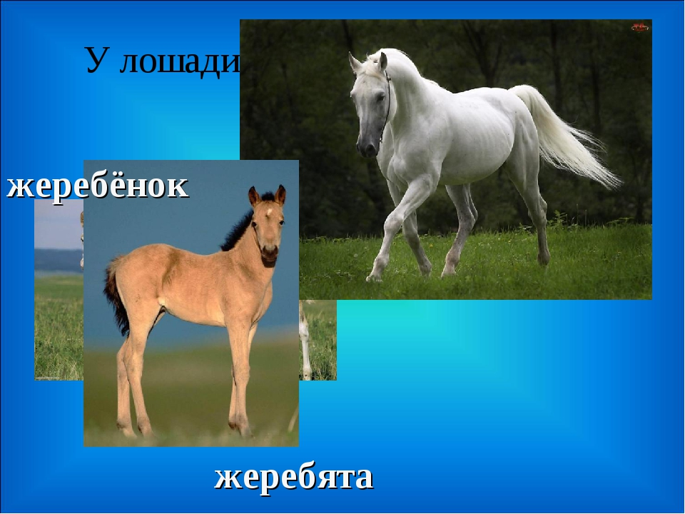 У лошади… жеребята жеребёнок